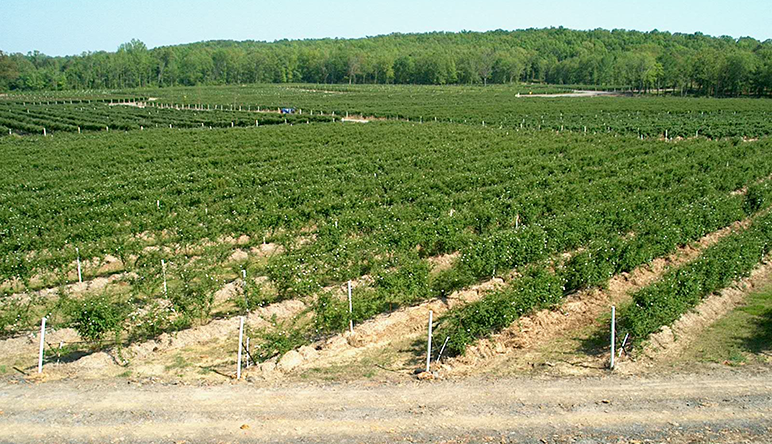 Natural Resources Of Arkansas